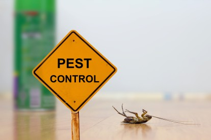 Pest Contol in Ladbroke Grove, North Kensington, W10. Call Now 020 8166 9746