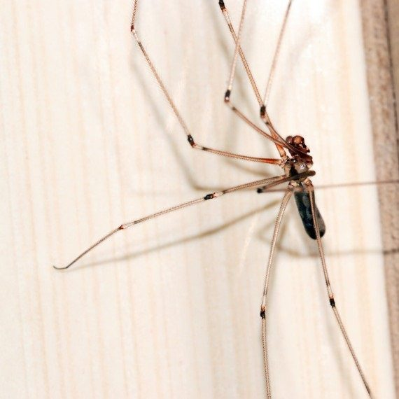 Spiders, Pest Control in Ladbroke Grove, North Kensington, W10. Call Now! 020 8166 9746