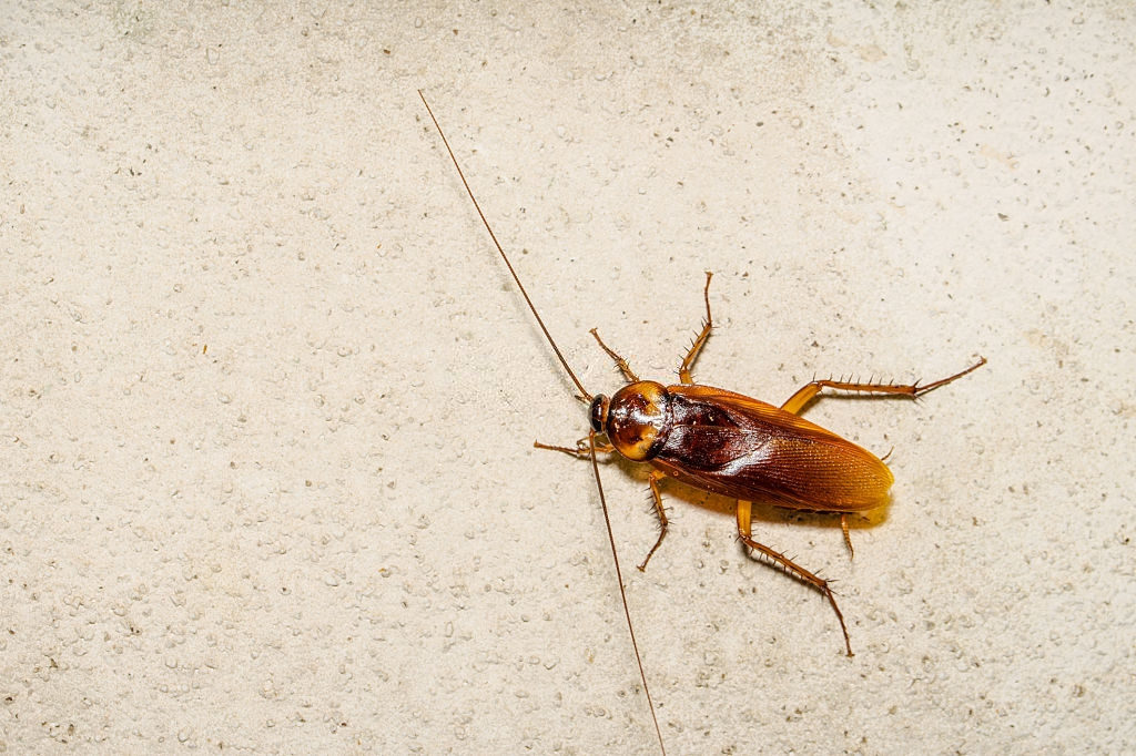 Cockroach Control, Pest Control in Ladbroke Grove, North Kensington, W10. Call Now 020 8166 9746